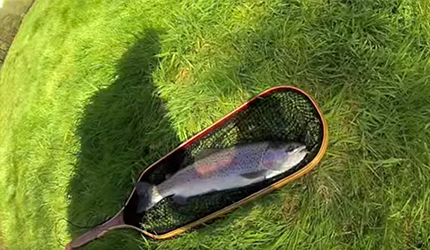Rainbow Trout Catch - Life Hacks